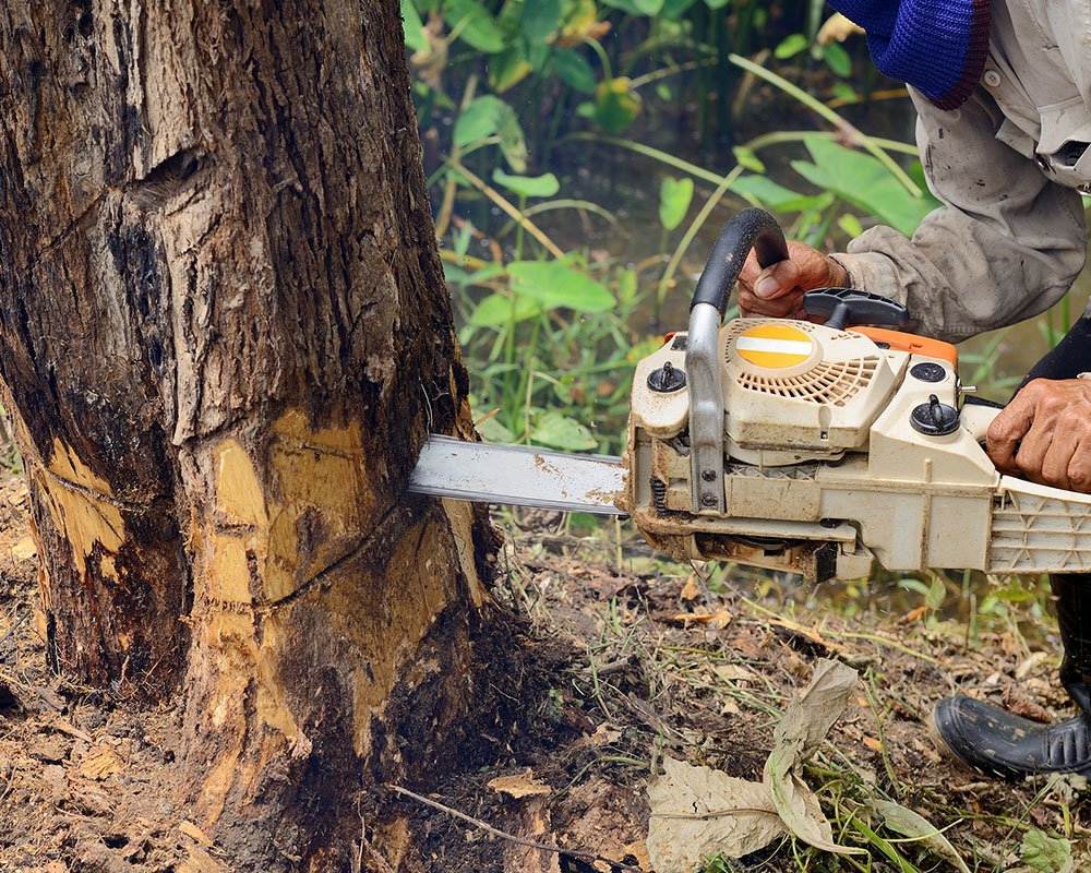 Tree Service Amherst - Tree Removal
