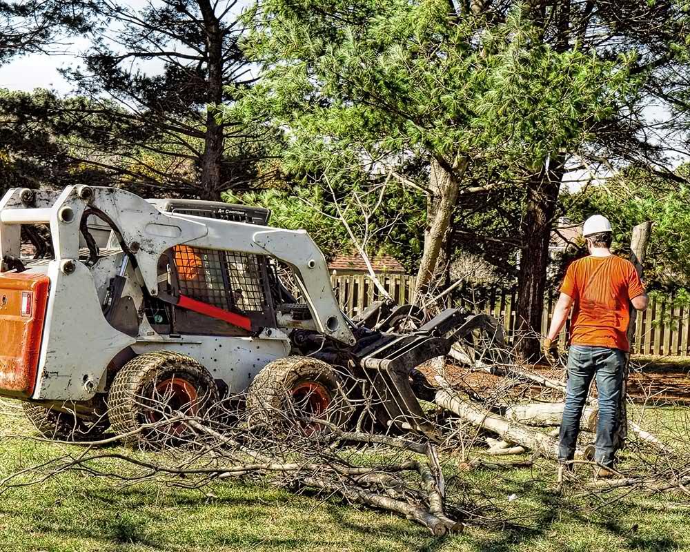 Tree Service Amherst - Arborist