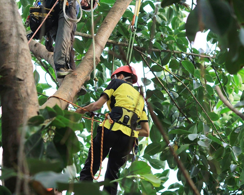 Tree Service Amherst - Emergency Tree Removal