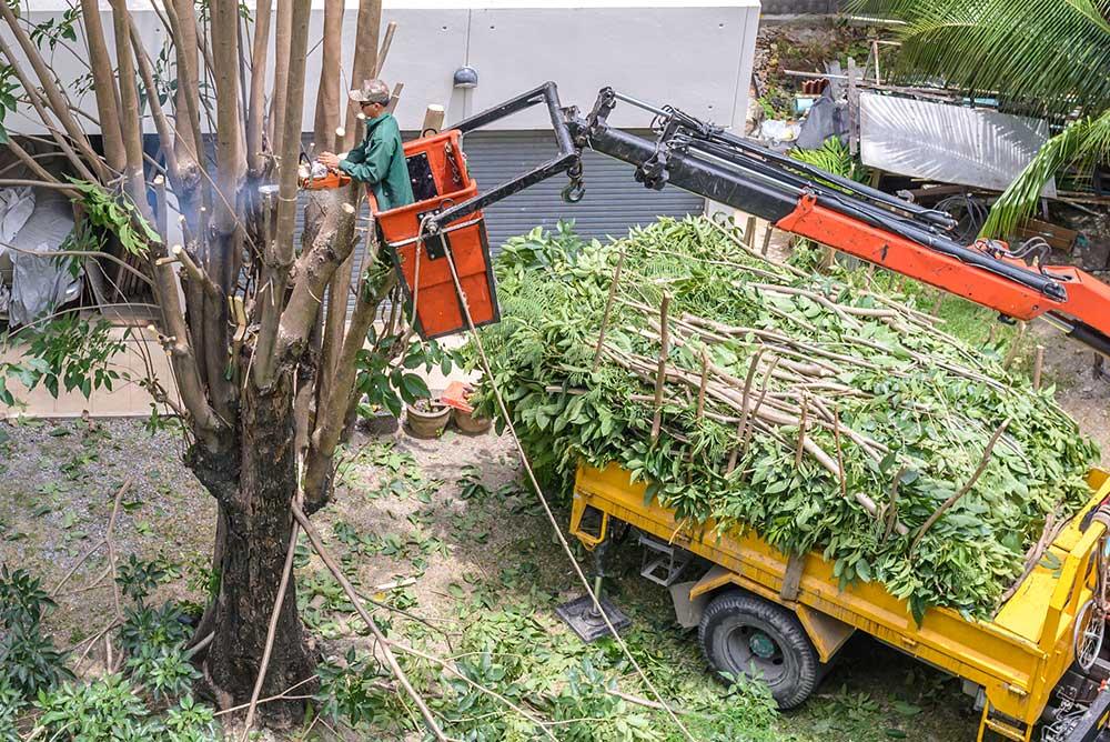 Tree Service Amherst - Tree Pruning