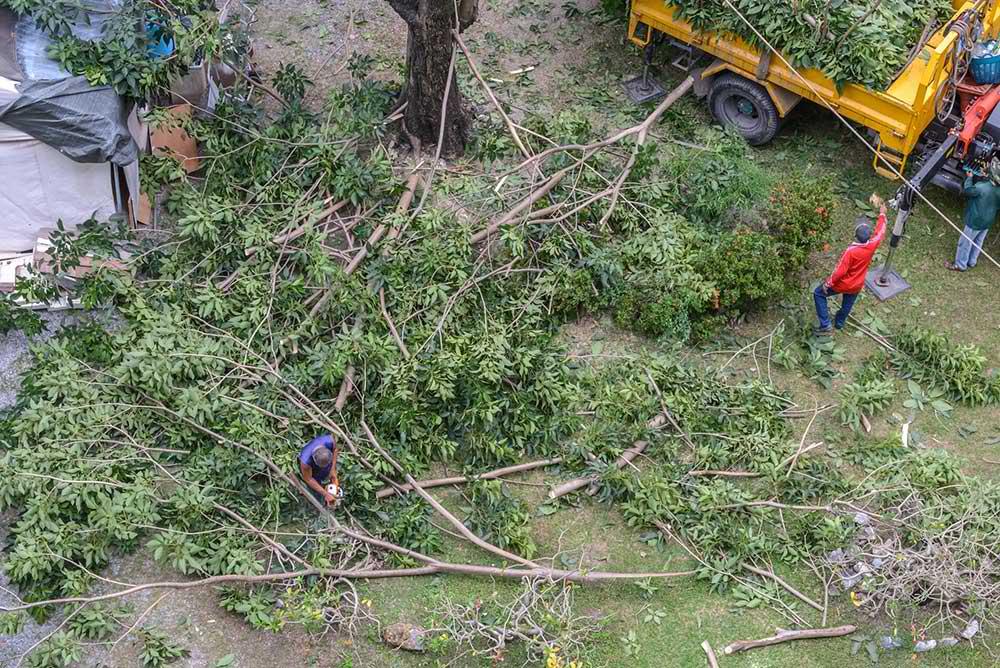 Tree Service Amherst - Tree Trimming