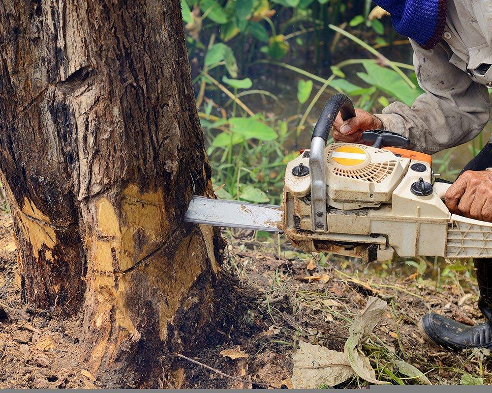Tree Service Snyder - Tree Removal
